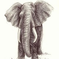Imagined Elephant