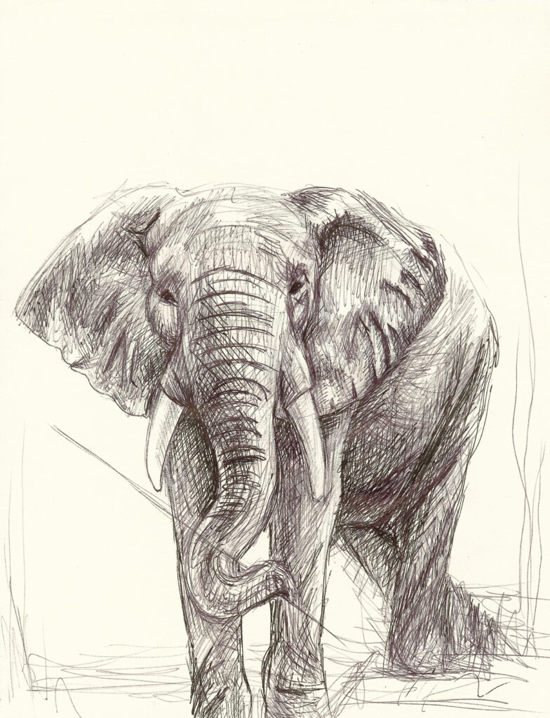The Director, elephant drawing